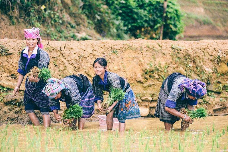 semage-riz-sapa