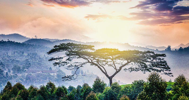 bigstock-Panorama-of-lonely-tree-on-sun-106273271