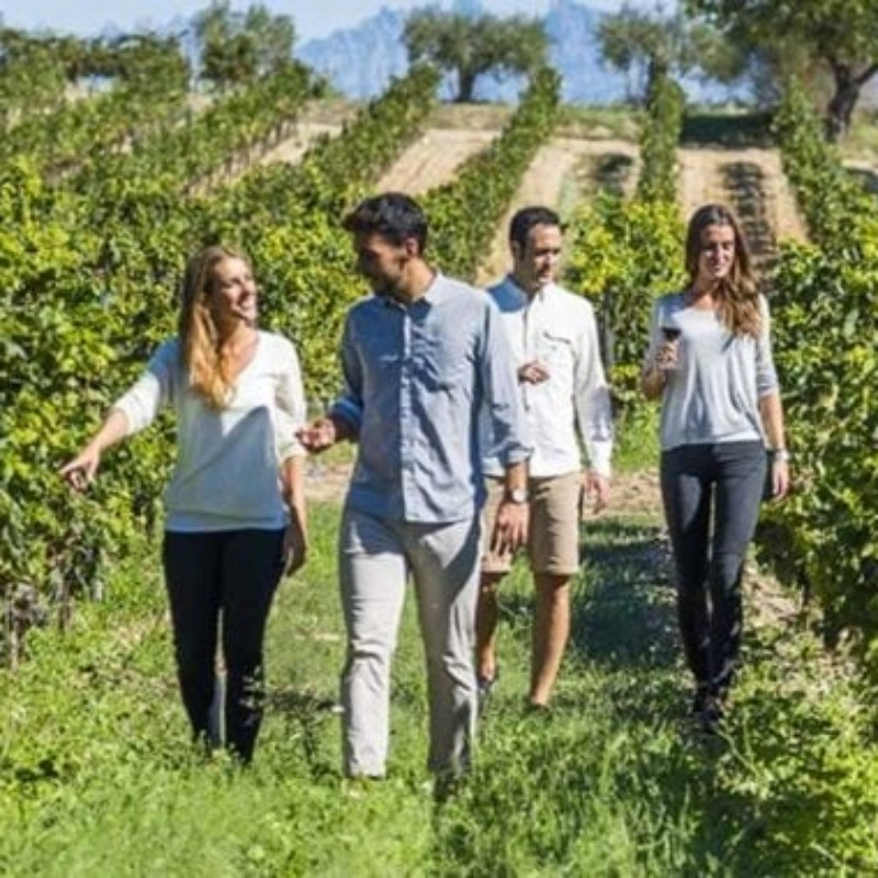 Gourmet walks to discover Bordeaux and its region
